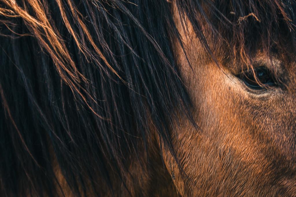 Pferdeblick